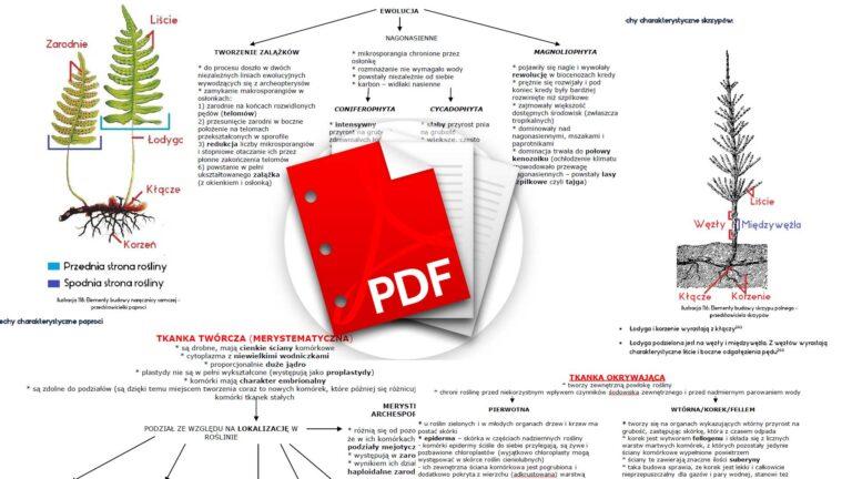 Biologia notatki rośliny pdf